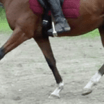 Working under saddle