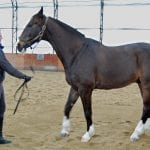 Teach Your Horse to Stand 2