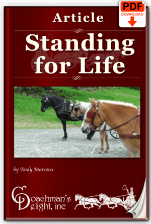 5 Reasons Your Horse Won't Stand 7