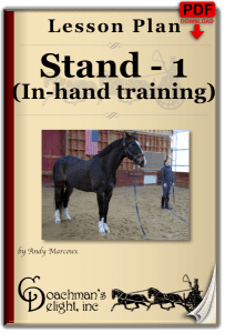 Teach Your Horse to Stand 1