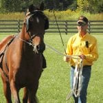 Tips for Returning Your Horse to Work 1