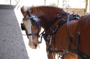 Good Pony Syndrome 2