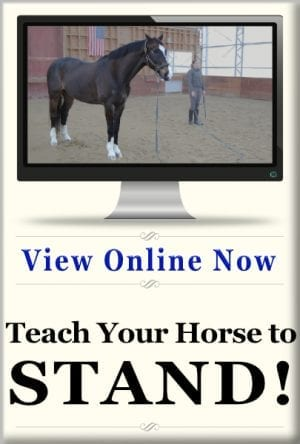Teach Your Horse to Stand online class