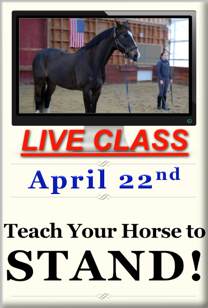 Teach Your Horse to Stand 3