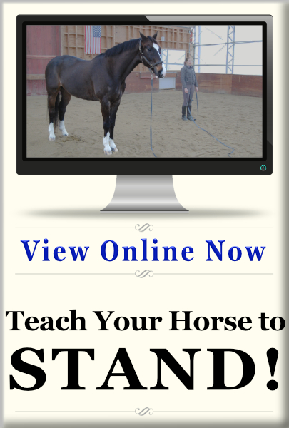Teach Your Horse to Stand