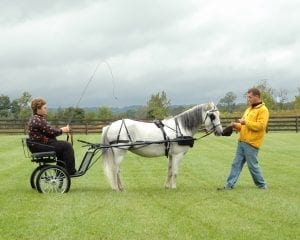 Andy explaining theory to a carriage driving pony