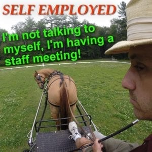 Talking to a carriage driving pony