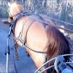 Runaway Pony?? 2