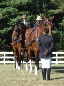 Good training means the groom doesn't have to hold onto the horses to keep them still.
