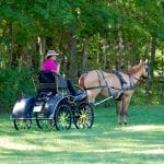 Does your carriage horse stand like this?
