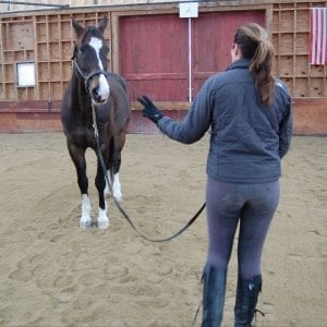 Start teaching your horse to stand with a simple lead & halter.